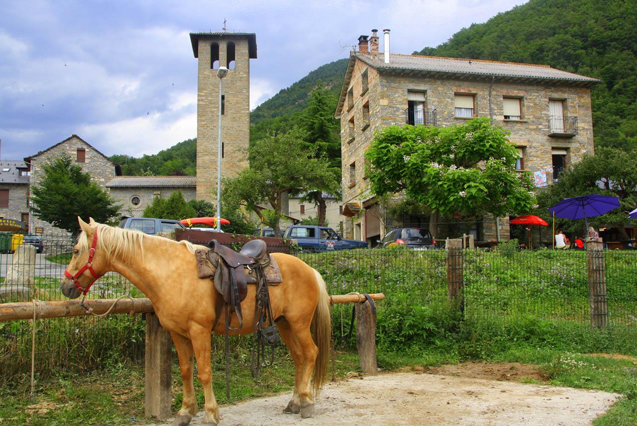 caballos sarvise
