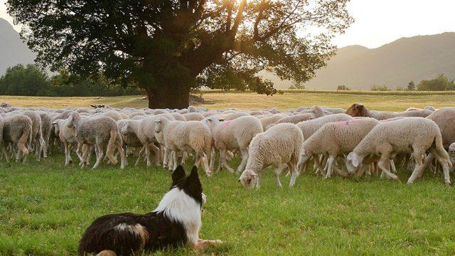 La borda de pastores