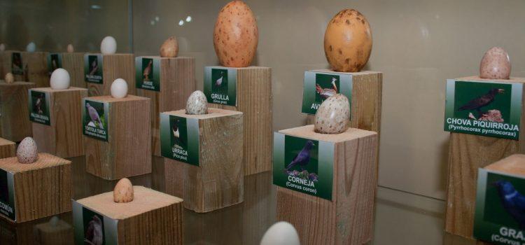 Museo de la Naturaleza de Daroca