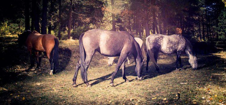 Un día entre caballos